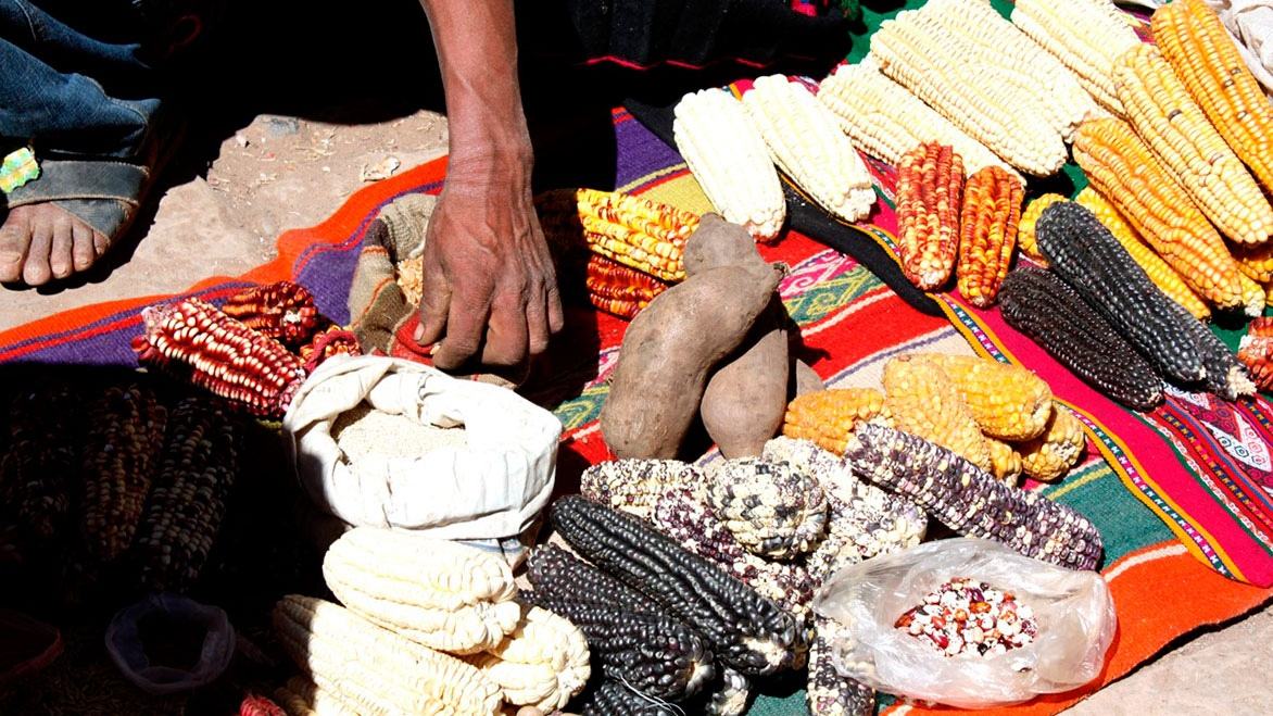 Agroecology and Food Markets