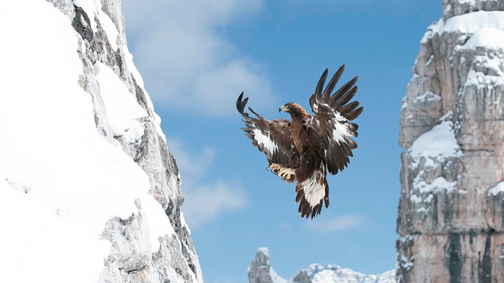 """Golden Eagle, Call of the Wild"", de Otmar Penker"
