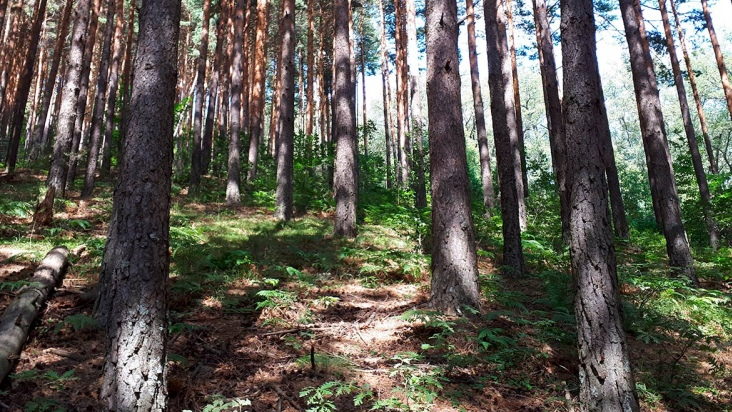 Reforestation Projects and Climate Change in the Autonomous Region of Madri